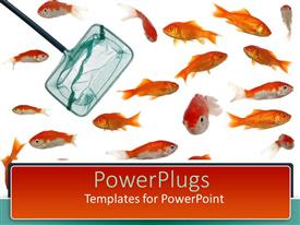 PowerPlugs: PowerPoint template with many fish and goldfish with fishing net on white background