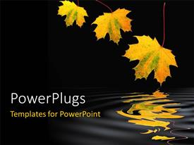 PowerPlugs: PowerPoint template with maple leaf abstract design in fall colors with shadow over rippled water against a black background