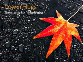 PowerPoint template displaying maple leaf on rain drops orange and yellow leaf on asphalt