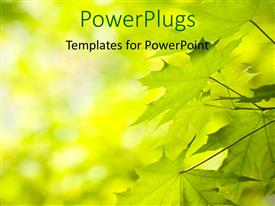 PowerPlugs: PowerPoint template with a number of green leaves with blurr background