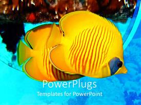 PowerPlugs: PowerPoint template with masked Butterflyfish yellow tropical fish in sea, ocean, coral, scuba diving