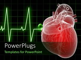 PowerPoint template displaying medical background with Anatomy depiction of a human heart