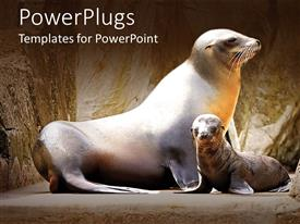 PowerPoint template displaying mother and baby sea lions, seals, nature, animals
