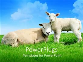 PowerPlugs: PowerPoint template with mother sheep lying next to standing lamb