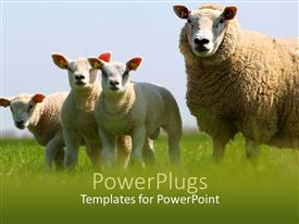 Audience pleasing slide deck featuring mother sheep and its three lambs in a field