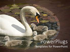 PowerPlugs: PowerPoint template with mother swan with her babies playing in lake filled with water lilies