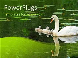 PowerPlugs: PowerPoint template with big swan with baby swans in pond with reflection in pond