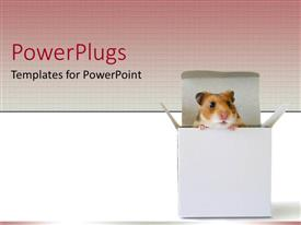 PowerPlugs: PowerPoint template with a mouse in a box with pink and white background