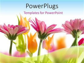 PowerPlugs: PowerPoint template with multi color flowers blossom in spring with sky