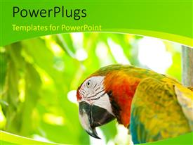 Amazing presentation design consisting of a multi colored parrot on a green blurry background