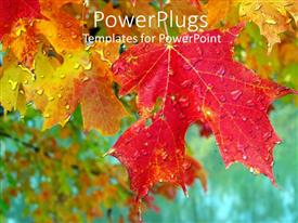 PowerPlugs: PowerPoint template with multicolored leaves with dew drops on them and blurred background