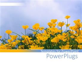 PowerPoint template displaying multiple yellow flowers planted in garden under blue sky