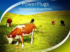 PowerPoint template displaying natural beauty with farm animals