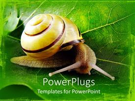 PowerPlugs: PowerPoint template with natural depiction of a snail on a wide leaf