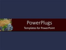 PowerPoint template displaying navy background with burgundy banner and grapes