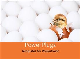 PowerPlugs: PowerPoint template with new-born chick in egg among the lot of white eggs