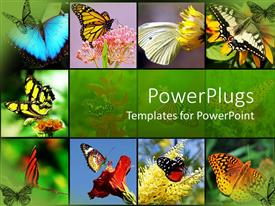 PowerPlugs: PowerPoint template with nine tiles with lots of colorful butterflies on them
