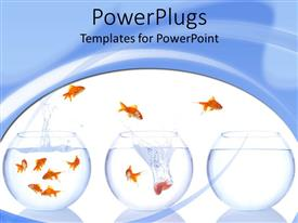 Beautiful PPT enhanced with a number of aquariums with golden fish
