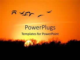 PowerPlugs: PowerPoint template with a number of birds with sunset in the background