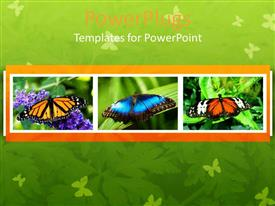 PowerPoint template displaying a number of butterflies with green background