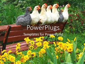 PowerPlugs: PowerPoint template with a number of chickens on a bench