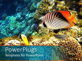 PowerPlugs: PowerPoint template with a number of colorful fish with coral reef in the background