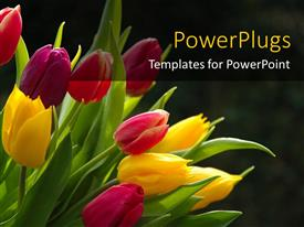 PowerPoint template displaying a number of colorful flowers with blackish background