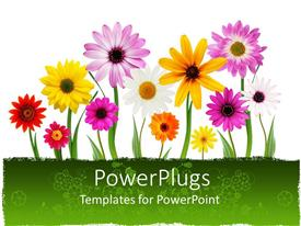 PowerPlugs: PowerPoint template with a number of colorful flowers with white background