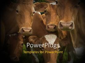 PowerPoint template displaying a number of cows in the field