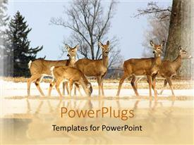 PowerPlugs: PowerPoint template with a number of deer with their reflection in the water