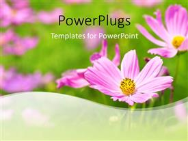 PowerPlugs: PowerPoint template with a number of flowers in the background