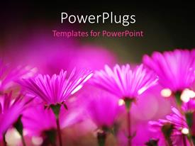 PowerPlugs: PowerPoint template with a number of flowers with blurr background