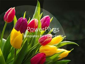 PowerPlugs: PowerPoint template with a number of flowers with a blurr background