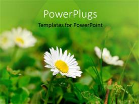 PowerPoint template displaying a number of flowers with blurred background