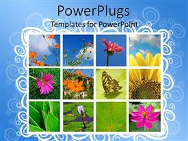 PowerPlugs: PowerPoint template with a number of flowers and butterfly in boxes