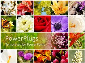 PowerPoint template displaying a number of flowers of different colors