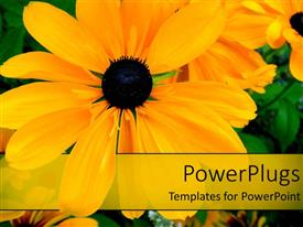 PowerPlugs: PowerPoint template with a number of flowers with green leaves in background