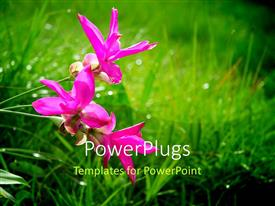 PowerPoint template displaying a number of flowers with greenery in the background