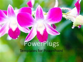 PowerPlugs: PowerPoint template with a number of flowers with greenery in the background