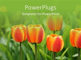 PowerPoint template displaying a number of yellowish orange flowers with greenish background
