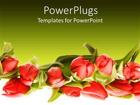 PowerPlugs: PowerPoint template with a number of flowers with greenish background