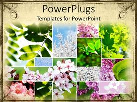 PowerPoint template displaying a number of flowers and leaves in various pictures