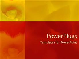 PowerPlugs: PowerPoint template with a number of flowers with multicolored backgrounds