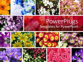 PowerPlugs: PowerPoint template with a number of flowers in the picture