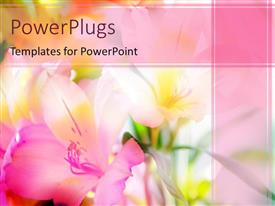 Presentation theme enhanced with a number of flowers with pinkish background and place for text