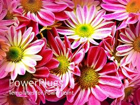 PowerPlugs: PowerPoint template with a number of flowers with place for text
