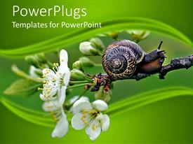 PowerPlugs: PowerPoint template with a number of flowers wih a snail