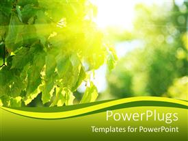 PowerPlugs: PowerPoint template with a number of green leaves along with sunlight with blurred background