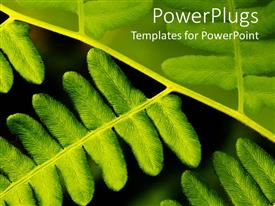 PowerPlugs: PowerPoint template with a number of green leaves with their reflection in the background