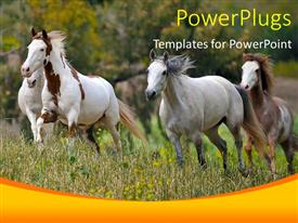 PowerPoint template displaying a number of horses on the run